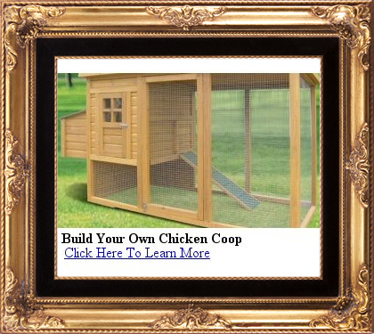how to build your own chicken coop with these designs