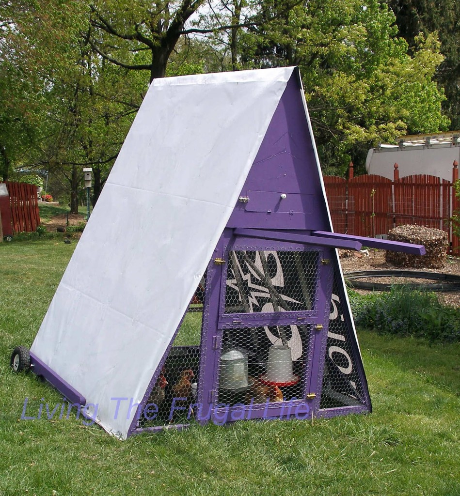purple chicken coop design