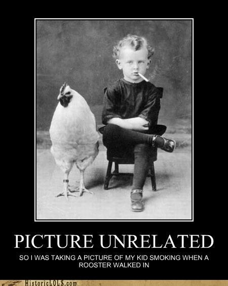 Funny rooster picture